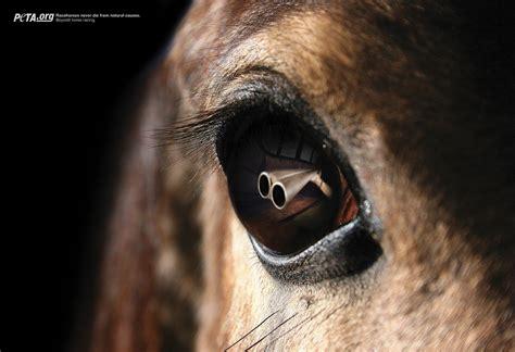 eye horse reflection reflections horses peta graphis haehyun fullscreen
