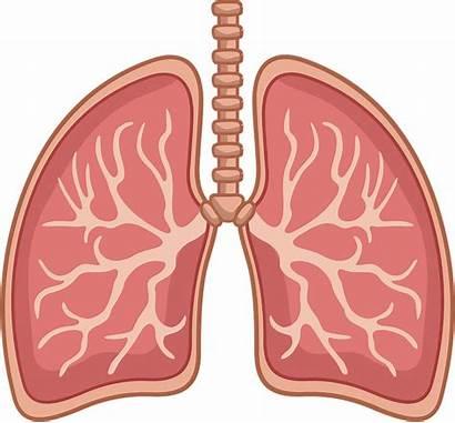 Lungs Clipart Creazilla Human Transparent Breath Anatomy