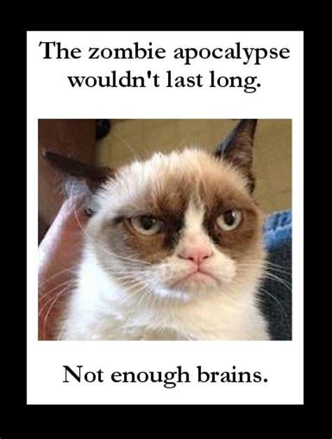 150 Best Images About Grumpy Cat On Pinterest  Grumpy Cat
