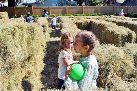 winter garden corn harvest festival todays orlando