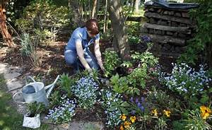 Pflanzen Im Schatten : die besten 17 ideen zu schattenpflanzen auf pinterest zimmerpflanzen schattenspendende ~ Orissabook.com Haus und Dekorationen