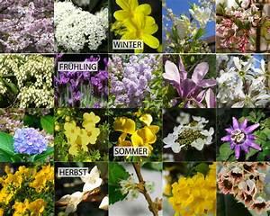 Welche Blumen Blühen Im Mai : bl hende str ucher ber das ganze jahr gardomat ~ Eleganceandgraceweddings.com Haus und Dekorationen