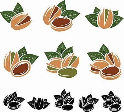 Pistachio Vector Clip Nuts Illustrations Similar