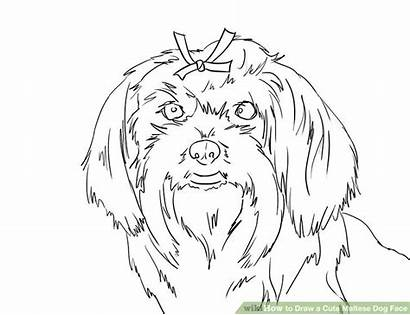 Maltese Dog Draw Face Dogs Puppy Step