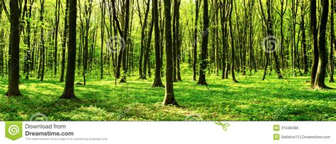 deciduous forest panorama stock image image  march