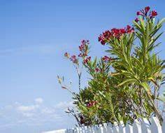 Winterharte Pflanzen Liste : 1000 ideas about winterharte pflanzen on pinterest ~ Michelbontemps.com Haus und Dekorationen