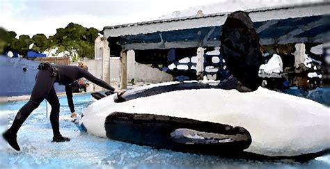 voice   orcas   seaworld announcing unnas