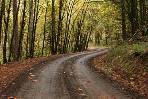 road, Forest, Fall, Path, Oak trees, Oregon Wallpapers HD ...