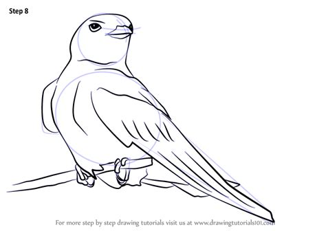 learn   draw  american cliff swallow birds step