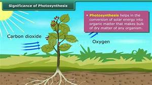 Significance Of Photosynthesis