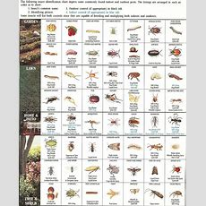 Insectidentificationchart  Insect Identification