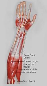 Foreman Stretches That Are Also Good For Helping Carpal