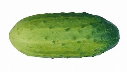 Clipart Cucumber Vegetables Fruit Names Single Cool