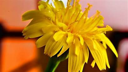 Yellow 1080p Flowers Nature Wallpapers Abstract Backgrounds