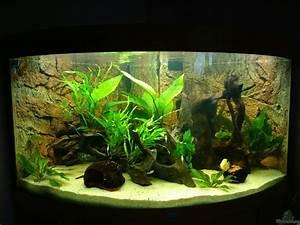 Juwel Trigon 350 : aquarium von 1887woeh mittel s damerika trigon 350 ~ Frokenaadalensverden.com Haus und Dekorationen