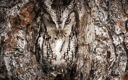 Realtree Camo Wallpapers Camouflage Owl Wiki