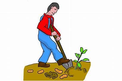 Dig Digging Farmer Potatoes Potato Sweet Arab