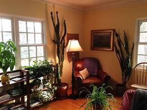 lucky bamboo in bedroom feng shui home delightful south With bathroom in south east corner