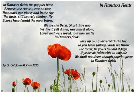poppy poems for remembrance day veterans day poppy flowers poem graphic