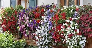 Balkonblumen Richtig Pflanzen : 10 tipps f r pr chtige balkonblumen mein sch ner garten ~ Frokenaadalensverden.com Haus und Dekorationen