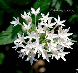 Star Cluster in White Flowers (page 3) - Pics about space