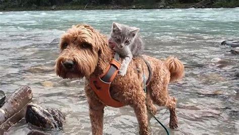 kitten  dog  friend carry      blue dot magazine