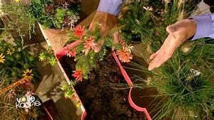 Herbstblumen Für Kübel : herbstliche balkonbepflanzung zdfmediathek ~ Buech-reservation.com Haus und Dekorationen