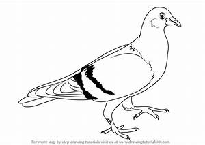 Learn How To Draw A Pigeon Birds Step By Step Drawing