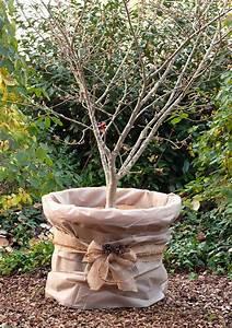 Große Winterharte Kübelpflanzen : winterschutz pflanzen seite 3 the garden shop ~ Michelbontemps.com Haus und Dekorationen