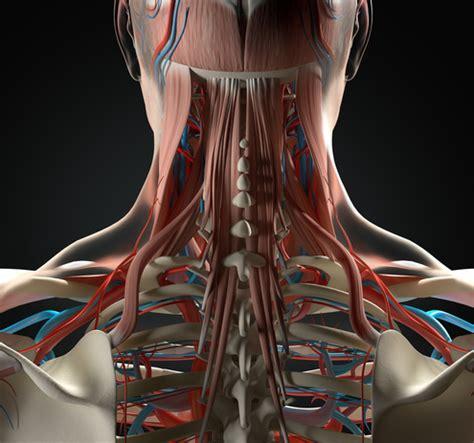 dolori cervicali mal di testa colpo di frusta dolori cervicali e insorgenza della cefalea