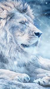 Phone Light Switch Lion Snow Big Cat King Of Beasts Wallpaper