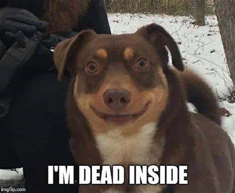 Im Dead Meme - funny animal pictures of the day 26 pics