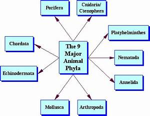 Seven Levels of Classification - Classification of Living ...  Phylum