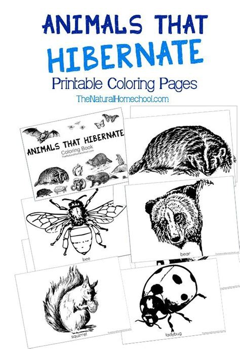 animals  hibernate  winter printable coloring book animals  hibernate coloring