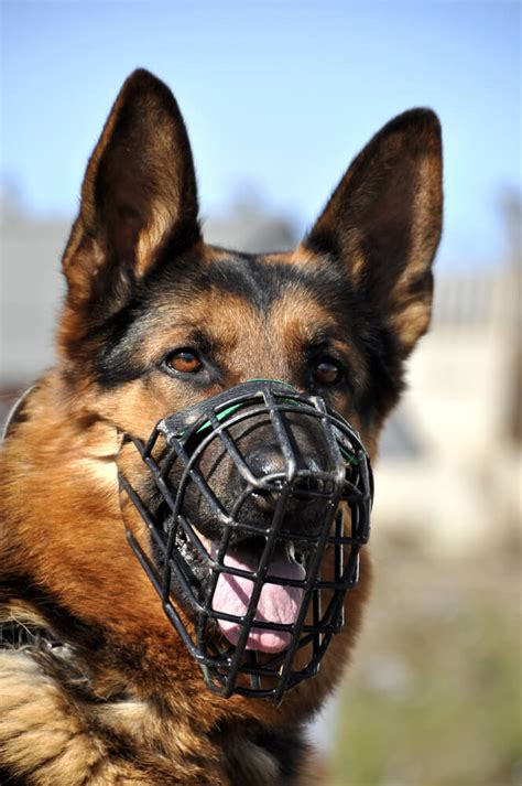 dog trainer muzzles         dog trainer quick  dirty tips