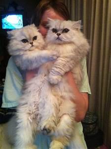Sunchi (nickname Tooney) & Precious - CatsCreation