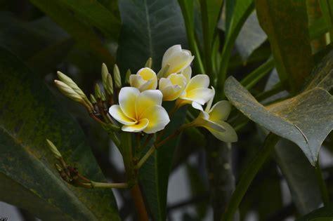 plante grasse fleur grand format des fleurs exotiques sous les tropiques