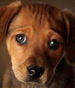 110 Baby Animals Looking Sad | Beautiful, Puppys and Too cute