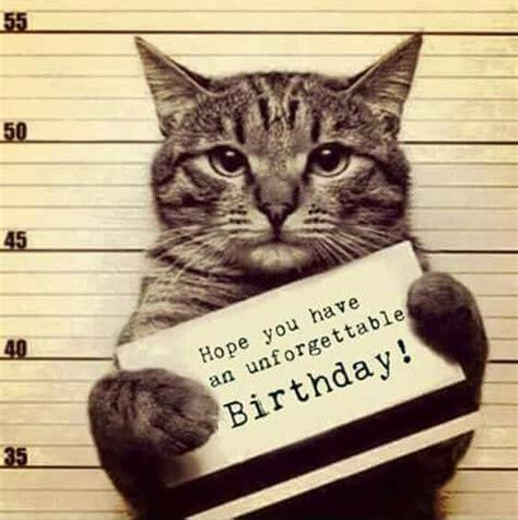 Birthday Meme Cat - best 26 cat birthday meme meme and cat