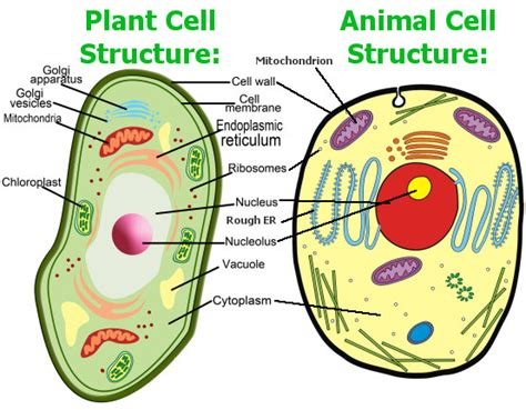 introduction   cells  organisms