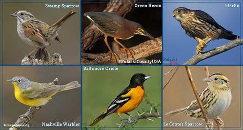 sw sparrow green heron merlin nashville warbler