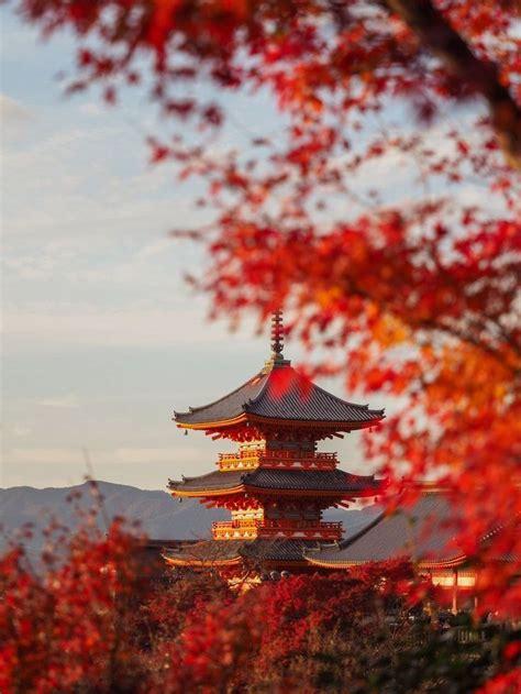 autumn  japan travel  photography tips  kyoto
