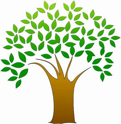 Tree Clip Clipart Vector Branches Leaf Trunk