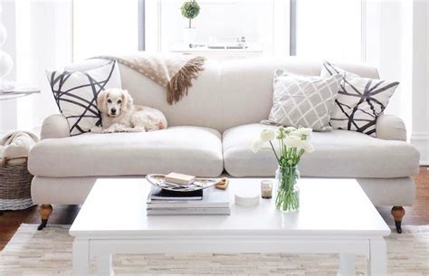 dog friendly sofa fabric pet friendly sofa how to choose pet friendly furniture
