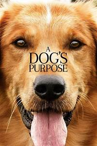 Watch A Dog's Purpose (2017) Movie Online Streaming ...