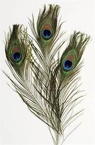 Peacock feather texture   Tattoo Ideas   Pinterest ...