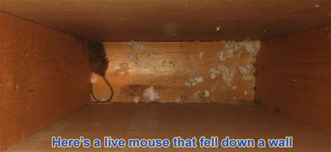 Mice in the Wall   How to Get a Mouse Out of Your Walls