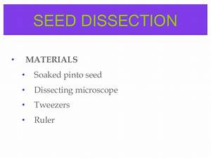 Seeds Fruits By Pooja