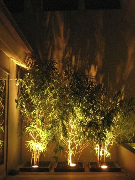 love  add uplighting   bamboo   backyard
