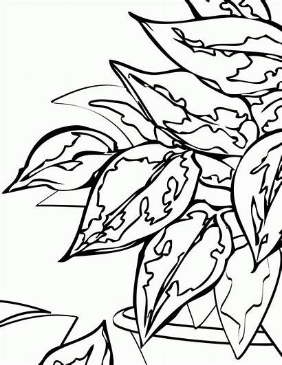 Coloring Plants Plant Pages Printable Leaf Drawing